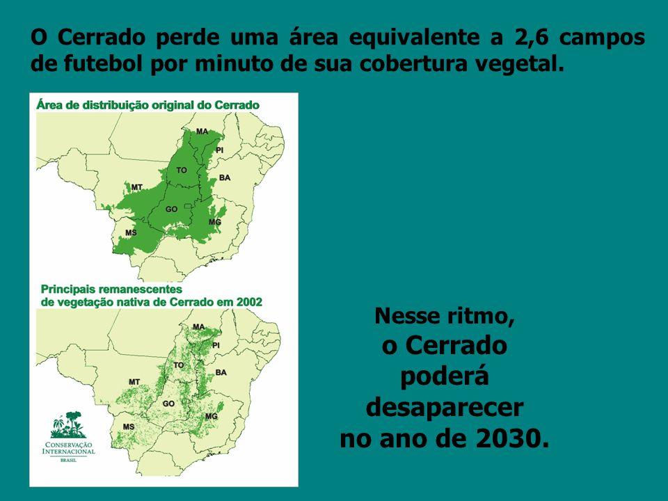 O Cerrado perde uma área equivalente a 2,6 campos de futebol por minuto de sua cobertura vegetal. Nesse ritmo, o Cerrado poderá desaparecer no ano de