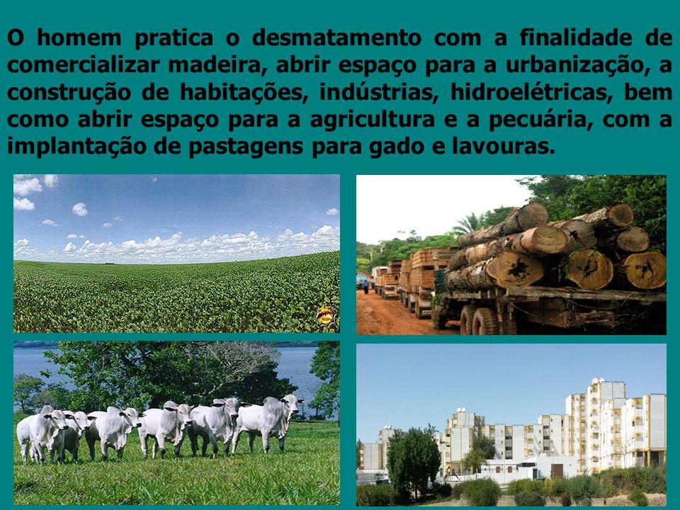 O homem pratica o desmatamento com a finalidade de comercializar madeira, abrir espaço para a urbanização, a construção de habitações, indústrias, hid