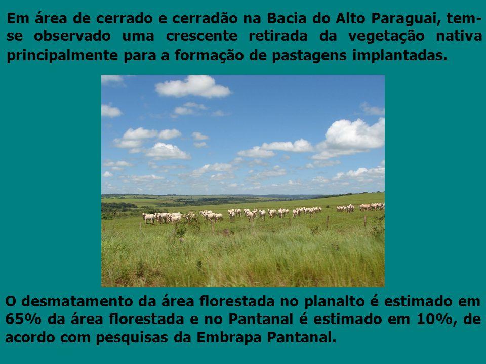 Em área de cerrado e cerradão na Bacia do Alto Paraguai, tem- se observado uma crescente retirada da vegetação nativa principalmente para a formação d