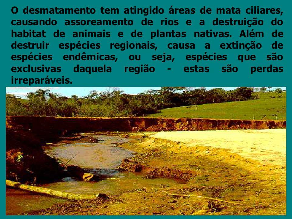 O desmatamento tem atingido áreas de mata ciliares, causando assoreamento de rios e a destruição do habitat de animais e de plantas nativas. Além de d