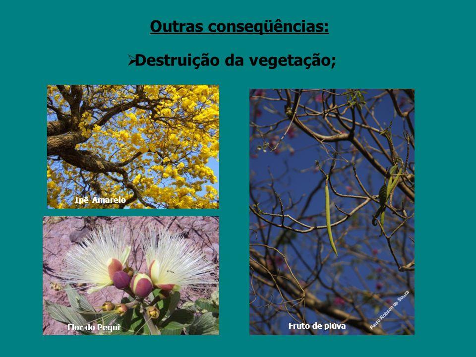 Flor do Pequi Ipê-Amarelo  Destruição da vegetação; Outras conseqüências: Fruto de piúva
