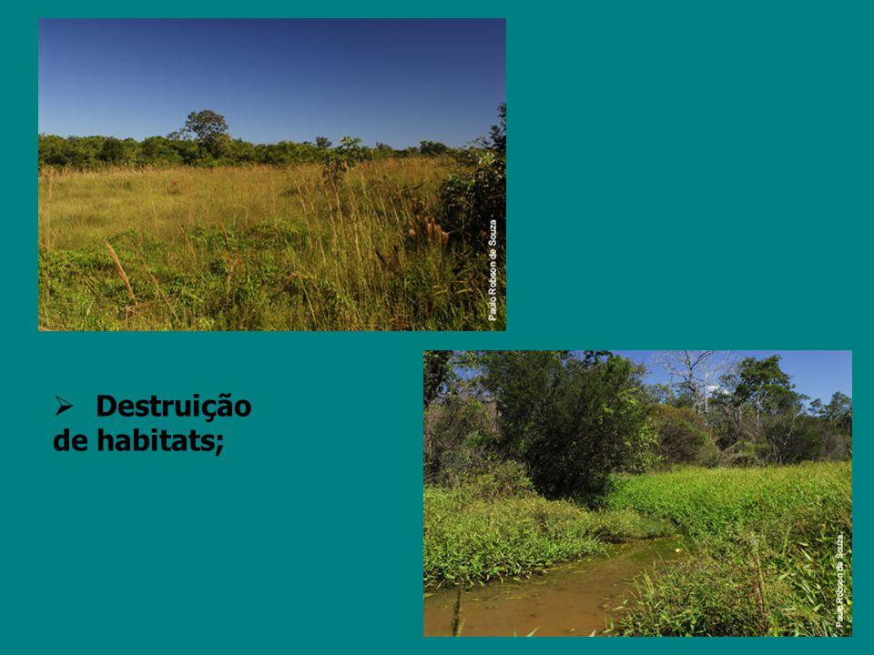 É um grande desafio mudar a visão errônea de que o desmatamento significa progresso.