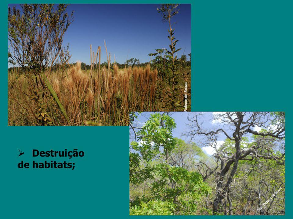 Essa posição ignora o fato do Cerrado ser um dos mais ricos biomas do mundo, com grande biodiversidade, e recursos hídricos valiosos para o Brasil.