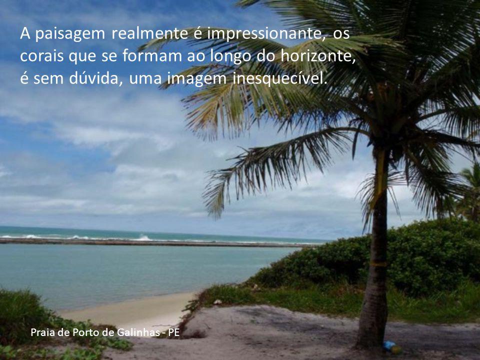 Praia de Porto de Galinhas - PE As piscinas se encontram a poucos metros da areia e podem ser exploradas andando por cima dos corais, nadando através