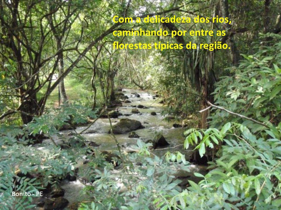 Bonito - PE É bastante conhecido como destino turístico, por apresentar cachoeiras de tamanhos e intensidades variadas.