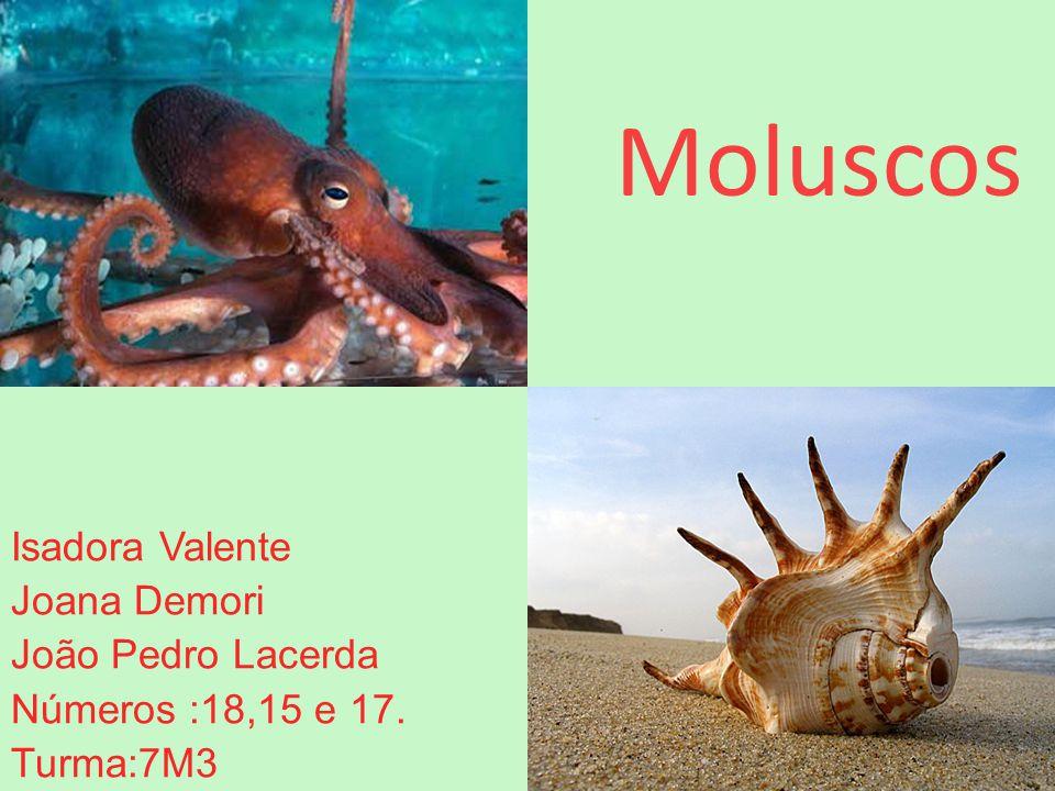 Moluscos Isadora Valente Joana Demori João Pedro Lacerda Números :18,15 e 17. Turma:7M3