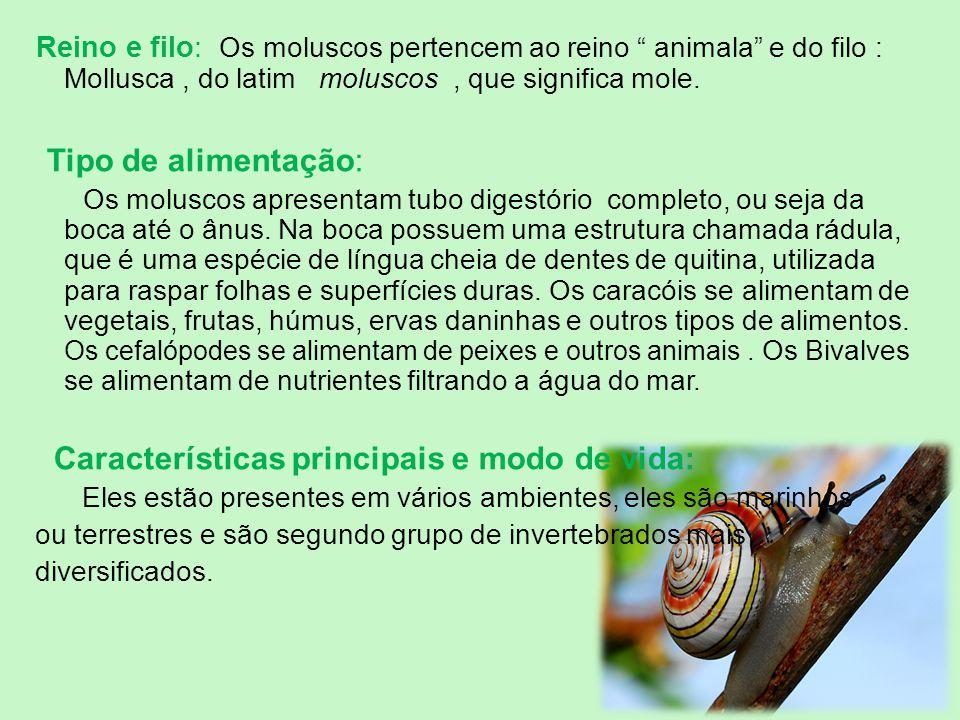 """Reino e filo: Os moluscos pertencem ao reino """" animala"""" e do filo : Mollusca, do latim moluscos, que significa mole. Tipo de alimentação: Os moluscos"""