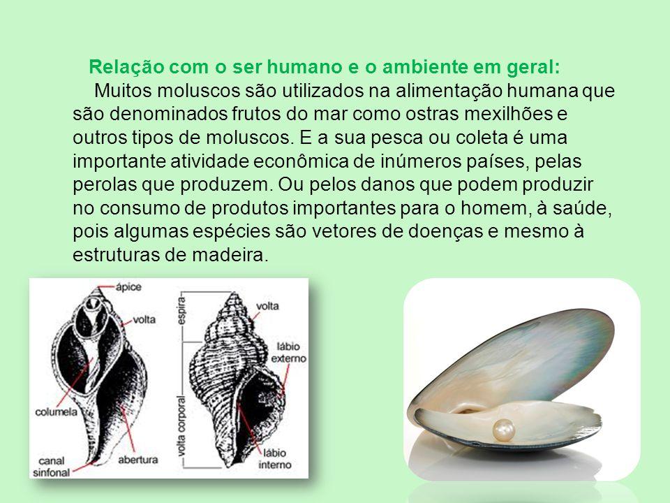 Relação com o ser humano e o ambiente em geral: Muitos moluscos são utilizados na alimentação humana que são denominados frutos do mar como ostras mex