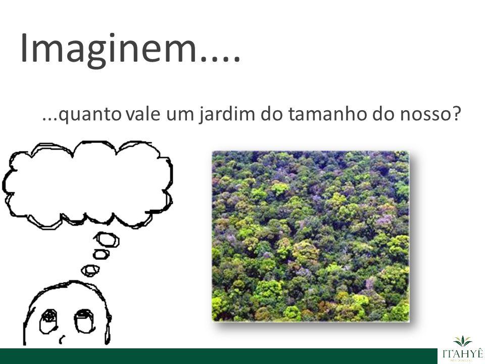 Obrigado Projeto idealizado por: Gel e Luciana Campanatti: Quadra ____, lote 8 Thaiany Assad e Guilherme Silva: Quadra X, lote 13 Apoio: The Green Garden Diretoria Itahyê