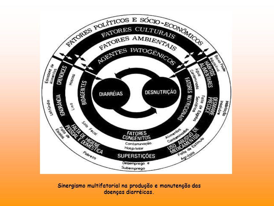 Sinergismo multifatorial na produção e manutenção das doenças diarréicas Sinergismo multifatorial na produção e manutenção das doenças diarréicas.