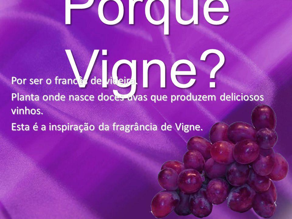 Porque Vigne. Por ser o francês de videira.