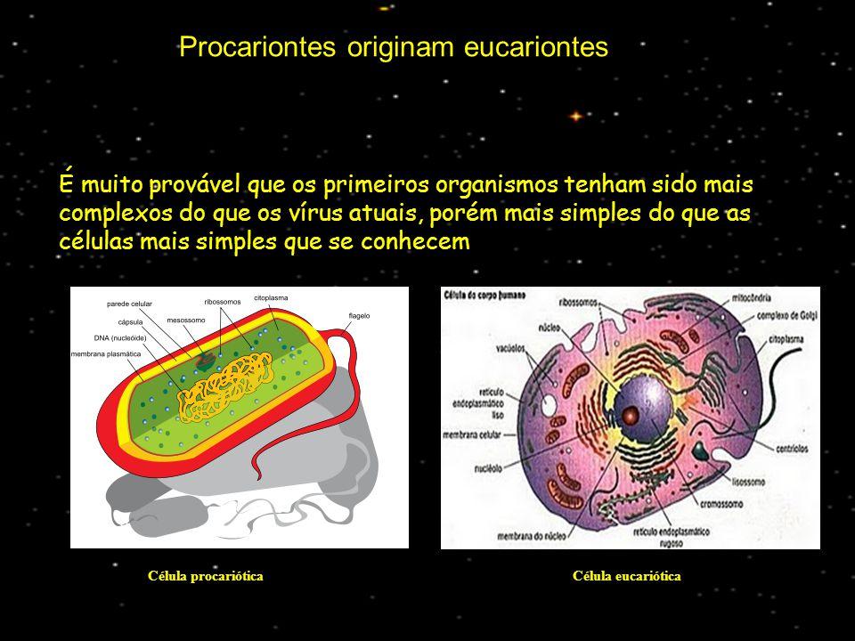 Procariontes originam eucariontes É muito provável que os primeiros organismos tenham sido mais complexos do que os vírus atuais, porém mais simples do que as células mais simples que se conhecem Célula procariótica Célula eucariótica