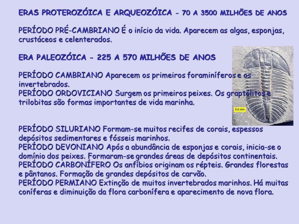 ERAS PROTEROZÓICA E ARQUEOZÓICA - 70 A 3500 MILHÕES DE ANOS PERÍODO PRÉ-CAMBRIANO É o início da vida.