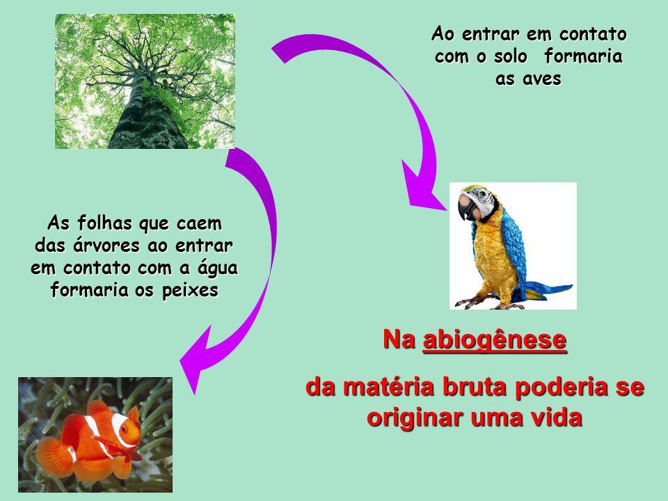 As folhas que caem das árvores ao entrar em contato com a água formaria os peixes Ao entrar em contato com o solo formaria as aves Na abiogênese da matéria bruta poderia se originar uma vida