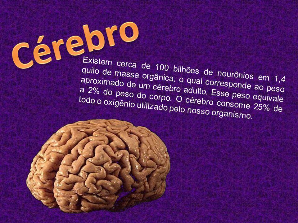 Existem cerca de 100 bilhões de neurônios em 1,4 quilo de massa orgânica, o qual corresponde ao peso aproximado de um cérebro adulto.