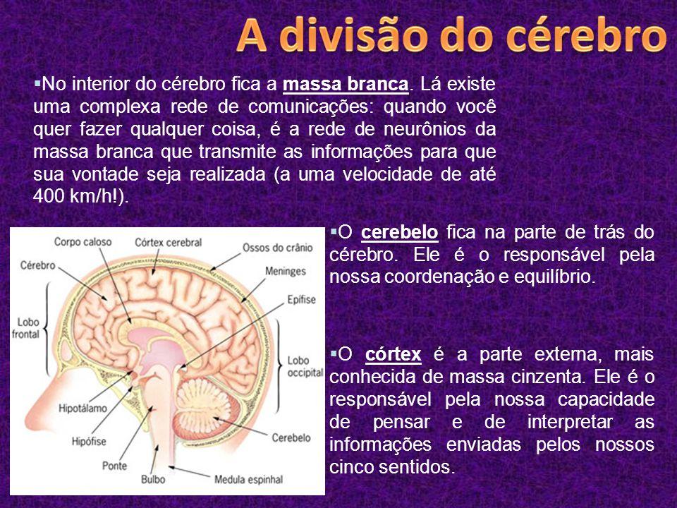  O córtex é a parte externa, mais conhecida de massa cinzenta. Ele é o responsável pela nossa capacidade de pensar e de interpretar as informações en