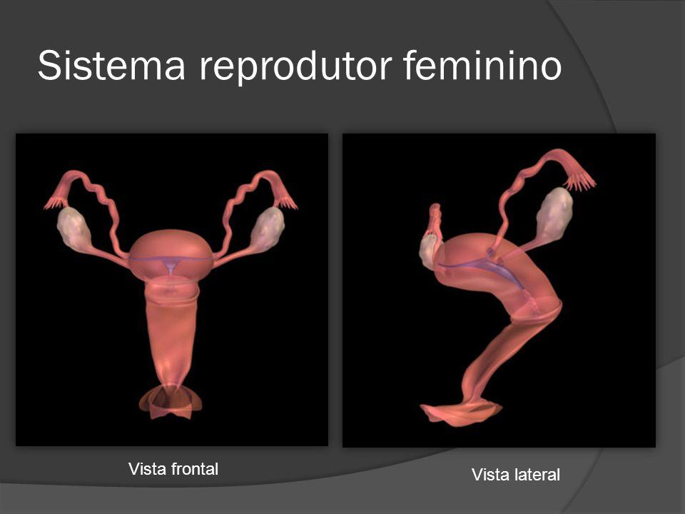 Sistema reprodutor feminino Vista frontal Vista lateral