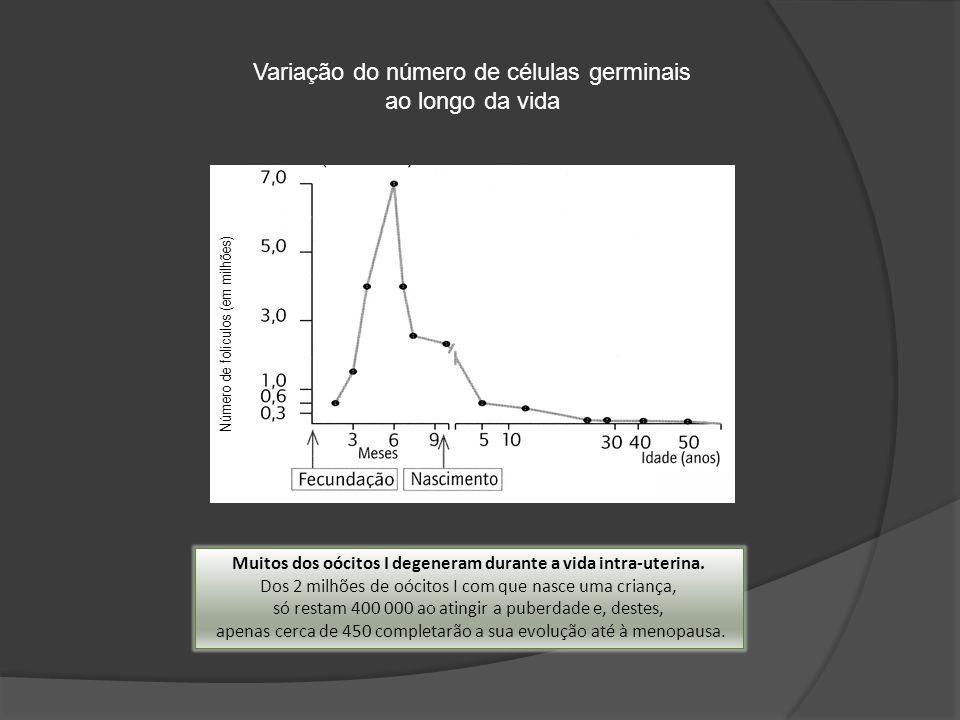 Número de folículos (em milhões) Variação do número de células germinais ao longo da vida Muitos dos oócitos I degeneram durante a vida intra-uterina.