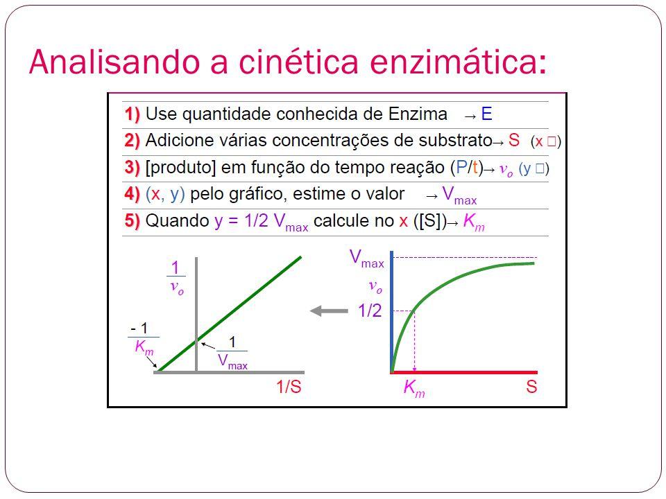 Construção dos gráficos e determinação de Km e Vmáx.