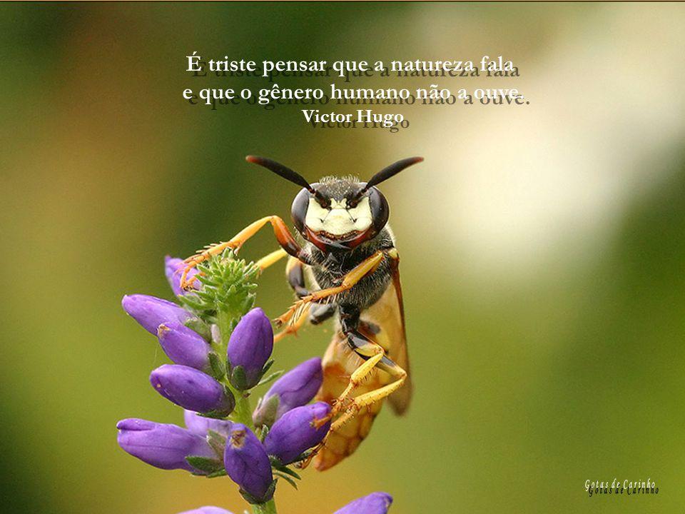 É triste pensar que a natureza fala e que o gênero humano não a ouve.