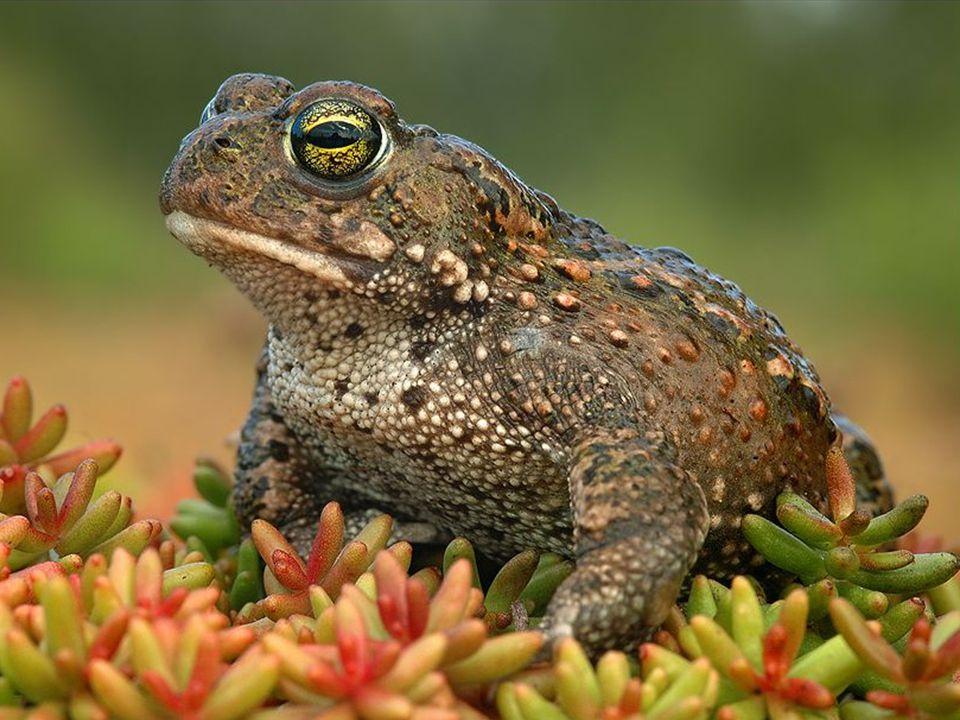 Só se pode vencer a natureza obedecendo-lhe. Francis Bacon