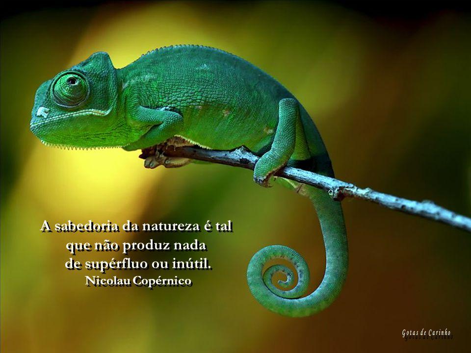 A sabedoria da natureza é tal que não produz nada de supérfluo ou inútil.