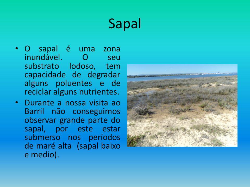 Sapal O sapal é uma zona inundável. O seu substrato lodoso, tem capacidade de degradar alguns poluentes e de reciclar alguns nutrientes. Durante a nos