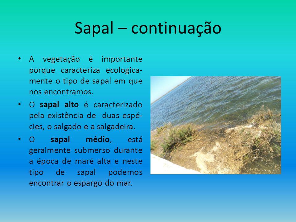 Sapal – continuação A vegetação é importante porque caracteriza ecologica- mente o tipo de sapal em que nos encontramos. O sapal alto é caracterizado