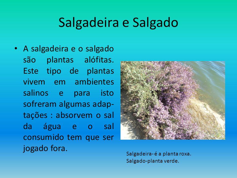 Salgadeira e Salgado A salgadeira e o salgado são plantas alófitas. Este tipo de plantas vivem em ambientes salinos e para isto sofreram algumas adap-