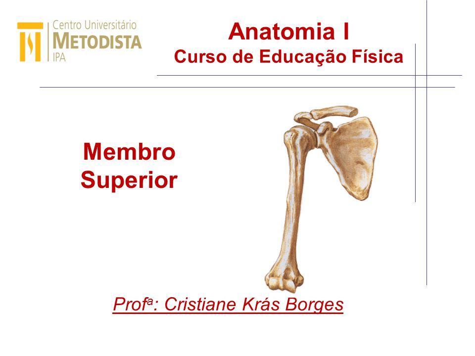 Anatomia I Curso de Educação Física Prof a : Cristiane Krás Borges Membro Superior