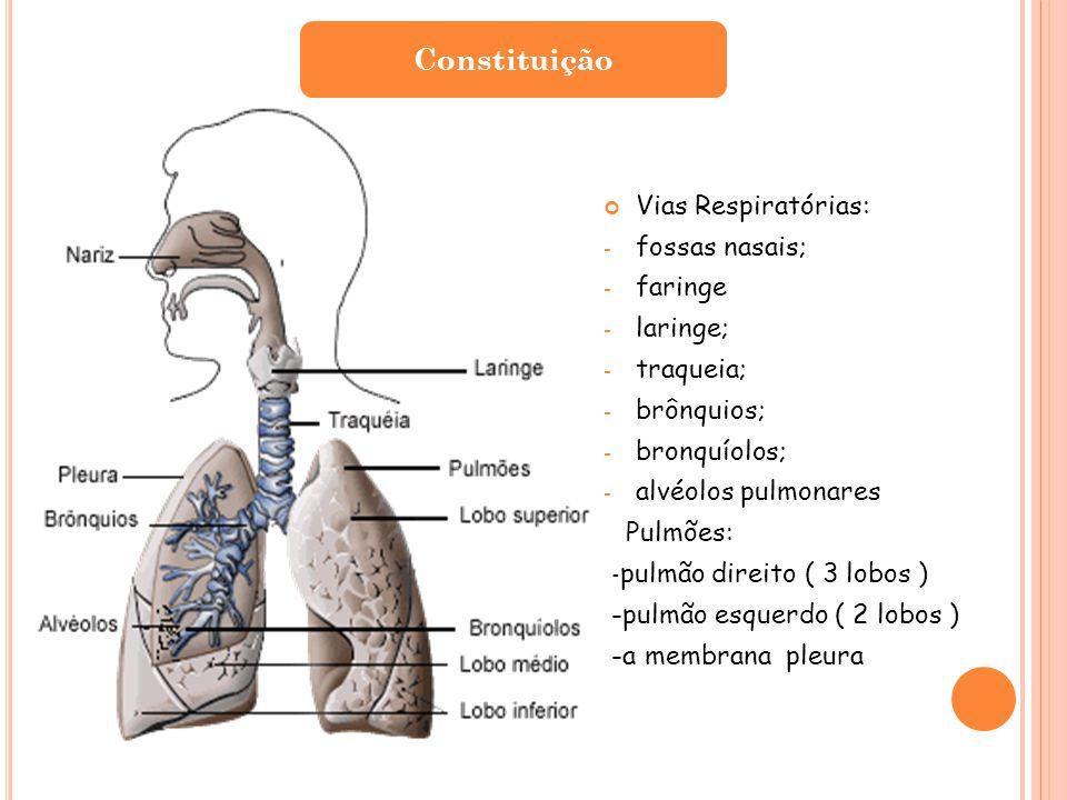 Vias Respiratórias: - fossas nasais; - faringe - laringe; - traqueia; - brônquios; - bronquíolos; - alvéolos pulmonares Pulmões: - pulmão direito ( 3