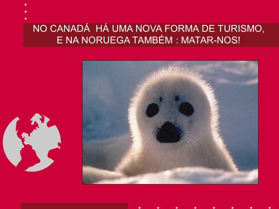 NO CANADÁ HÁ UMA NOVA FORMA DE TURISMO, E NA NORUEGA TAMBÉM : MATAR-NOS!