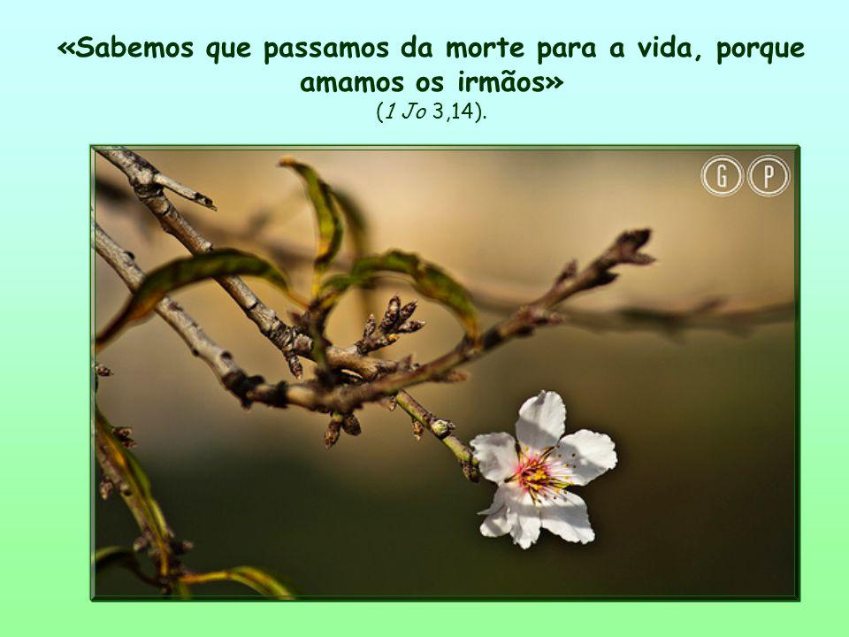 Então, tudo se ilumina, tudo se torna harmonioso.Não existe mais separação entre a fé e a vida.