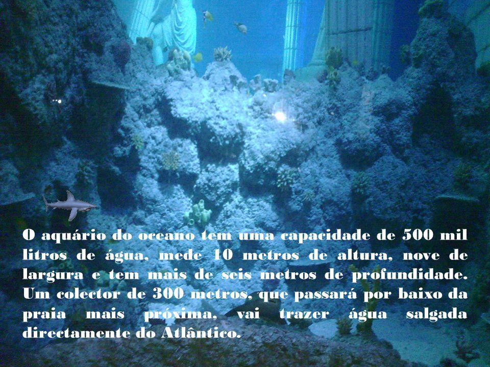 O aquário do oceano tem uma capacidade de 500 mil litros de água, mede 10 metros de altura, nove de largura e tem mais de seis metros de profundidade.
