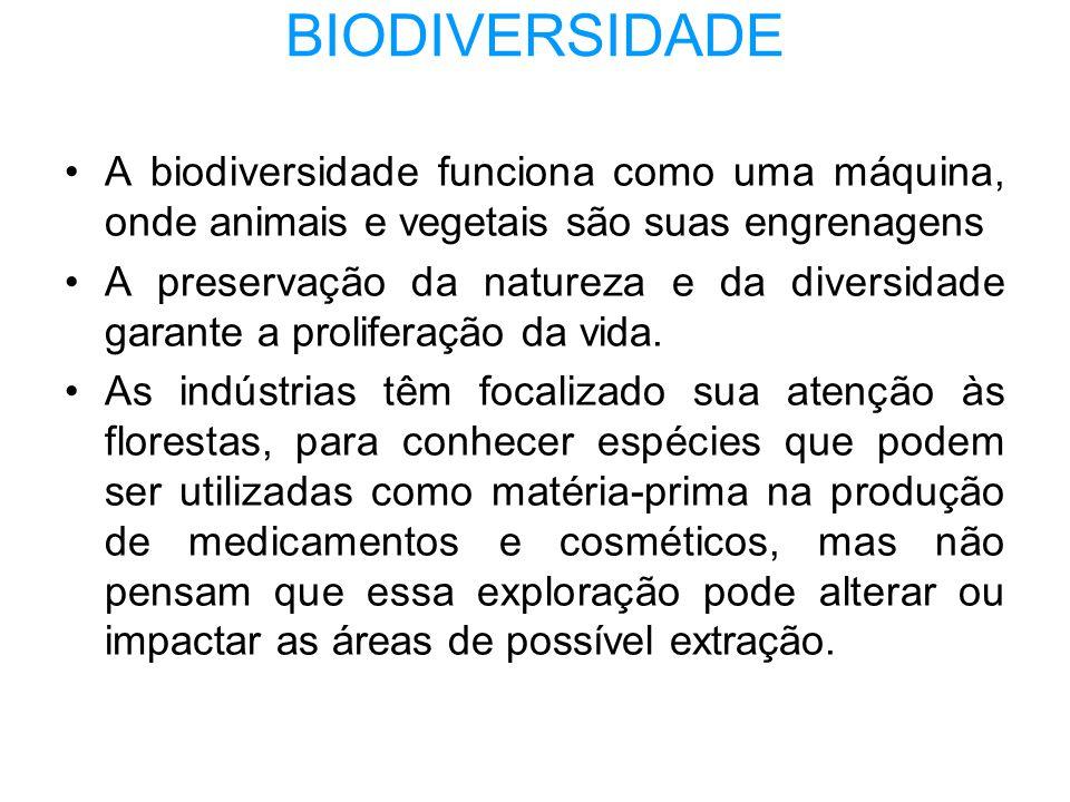 BIODIVERSIDADE •A biodiversidade funciona como uma máquina, onde animais e vegetais são suas engrenagens •A preservação da natureza e da diversidade g