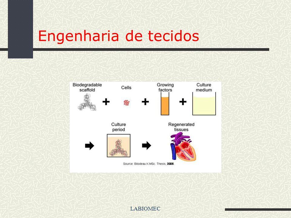 LABIOMEC Engenharia de tecidos A engenharia de tecidos é um novo ramo da ciência voltada para a pesquisa e desenvolvimento(P&D) de substitutos biológi