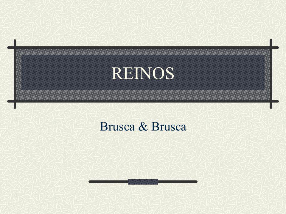 REINOS Brusca & Brusca