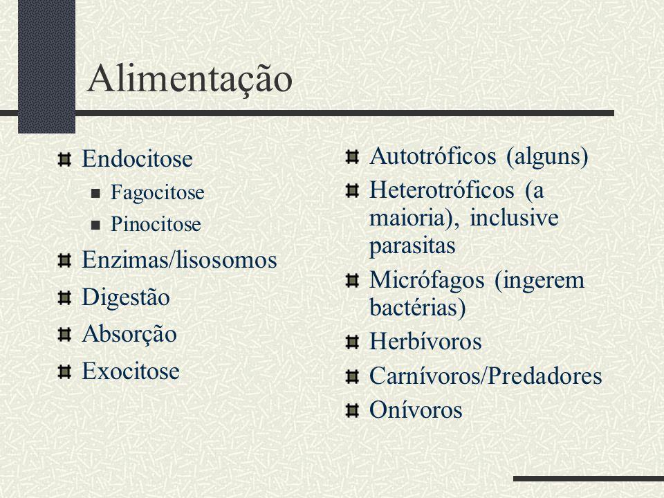 Alimentação Endocitose  Fagocitose  Pinocitose Enzimas/lisosomos Digestão Absorção Exocitose Autotróficos (alguns) Heterotróficos (a maioria), inclu