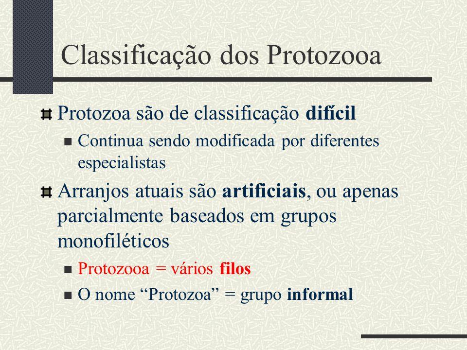 Classificação dos Protozooa Protozoa são de classificação difícil  Continua sendo modificada por diferentes especialistas Arranjos atuais são artific
