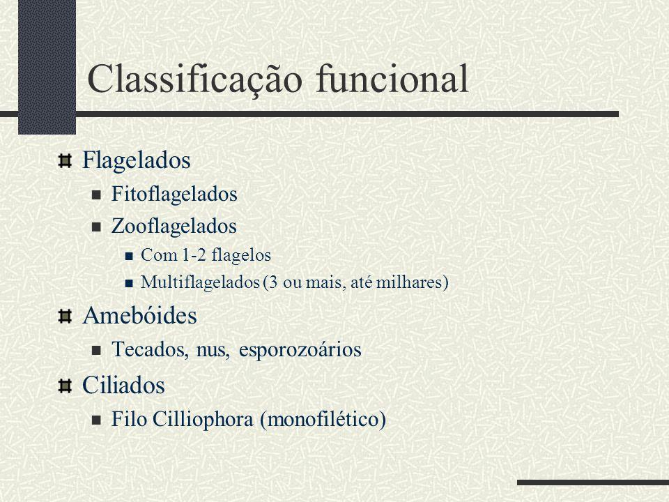 Classificação funcional Flagelados  Fitoflagelados  Zooflagelados  Com 1-2 flagelos  Multiflagelados (3 ou mais, até milhares) Amebóides  Tecados
