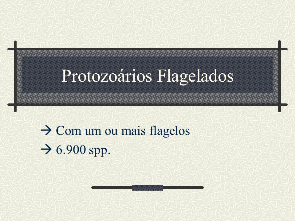 Protozoários Flagelados  Com um ou mais flagelos  6.900 spp.
