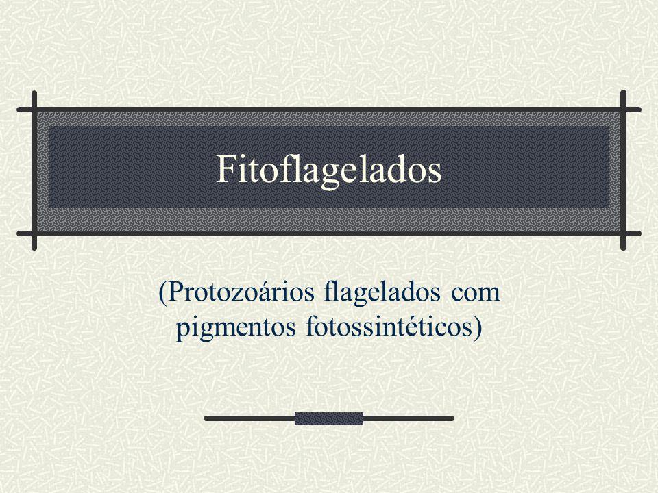 Fitoflagelados (Protozoários flagelados com pigmentos fotossintéticos)