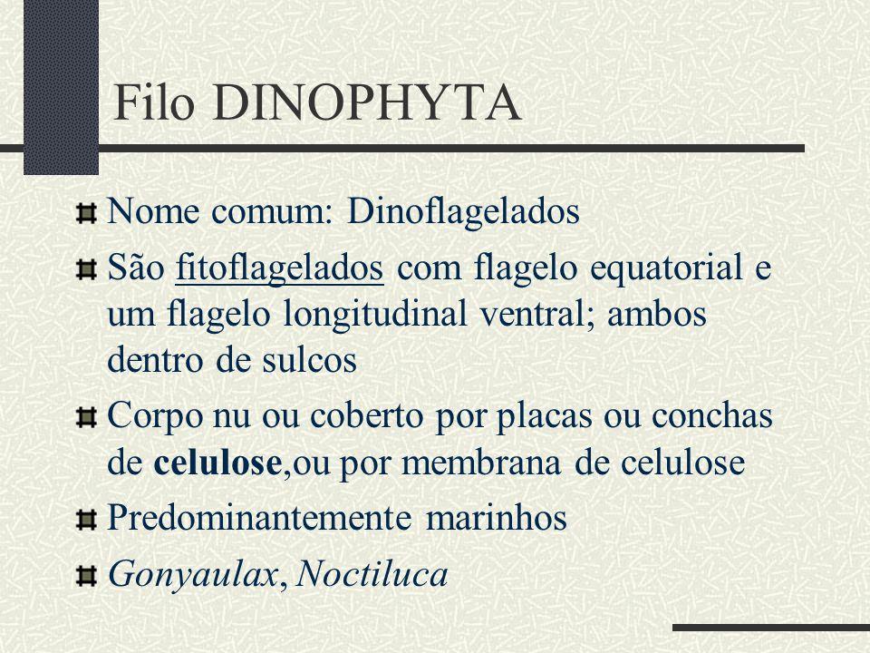 Filo DINOPHYTA Nome comum: Dinoflagelados São fitoflagelados com flagelo equatorial e um flagelo longitudinal ventral; ambos dentro de sulcos Corpo nu