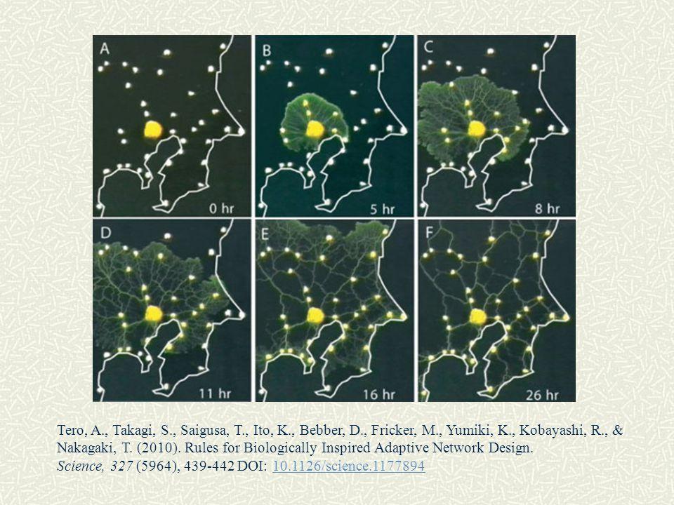 Tero, A., Takagi, S., Saigusa, T., Ito, K., Bebber, D., Fricker, M., Yumiki, K., Kobayashi, R., & Nakagaki, T. (2010). Rules for Biologically Inspired