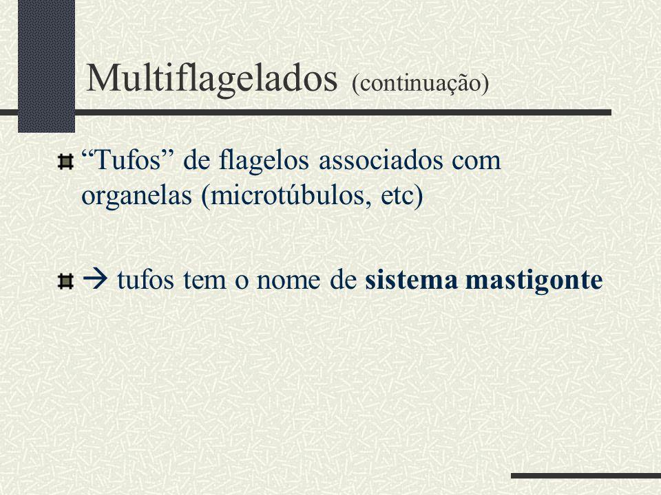 """Multiflagelados (continuação) """"Tufos"""" de flagelos associados com organelas (microtúbulos, etc)  tufos tem o nome de sistema mastigonte"""