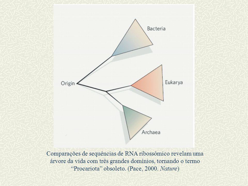 """Comparações de sequências de RNA ribossômico revelam uma árvore da vida com três grandes domínios, tornando o termo """"Procariota"""" obsoleto. (Pace, 2000"""