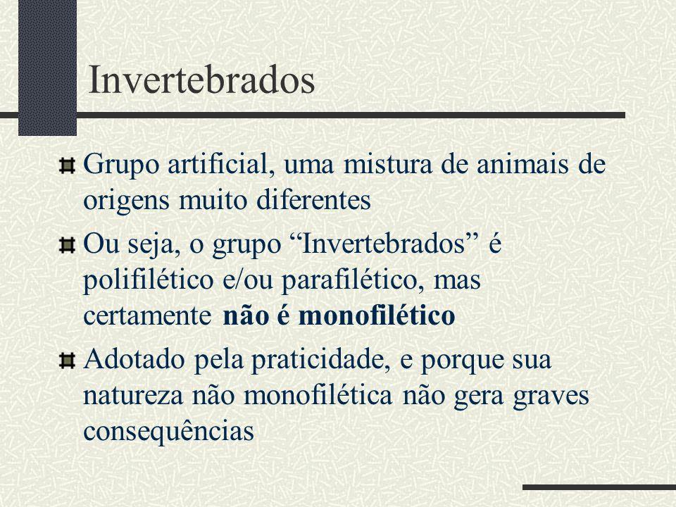 """Invertebrados Grupo artificial, uma mistura de animais de origens muito diferentes Ou seja, o grupo """"Invertebrados"""" é polifilético e/ou parafilético,"""