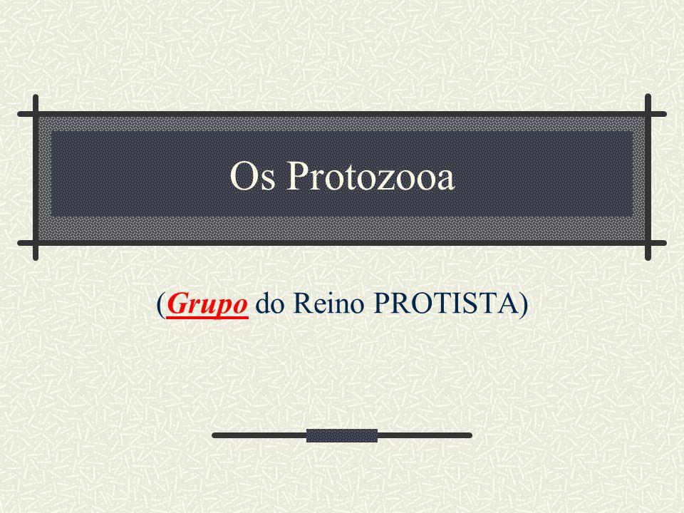 Os Protozooa (Grupo do Reino PROTISTA)