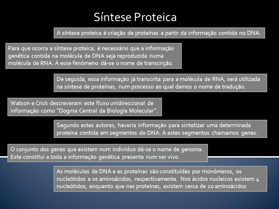 Síntese Proteica A síntese proteica é criação de proteínas a partir da informação contida no DNA.