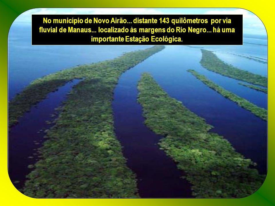 No município de Novo Airão...distante 143 quilômetros por via fluvial de Manaus...